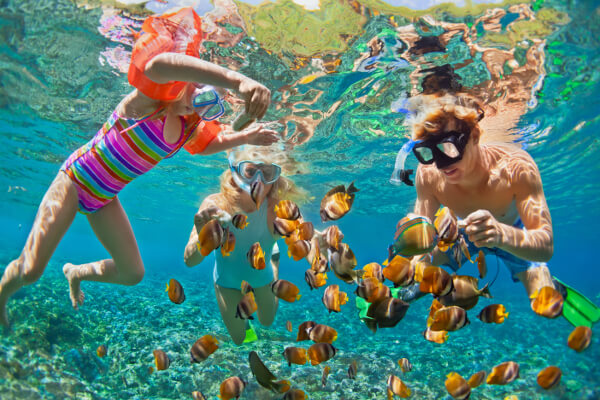family snorkeling looking at a school of fish